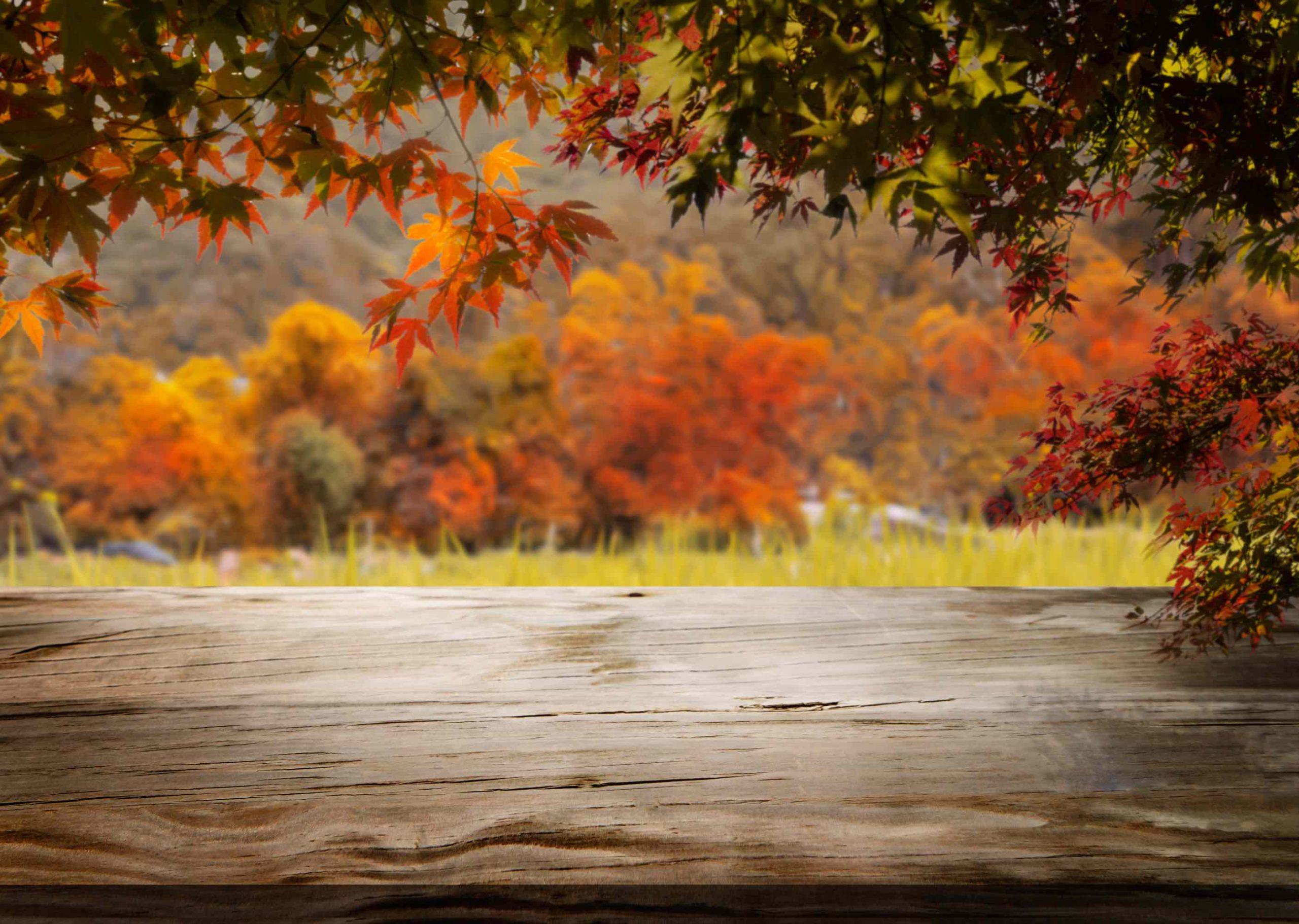 Celebrate The New Season With These Stylish Fall Decor Ideas